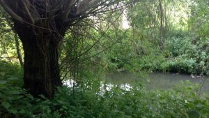 The stream flowing through Rosie's Wood